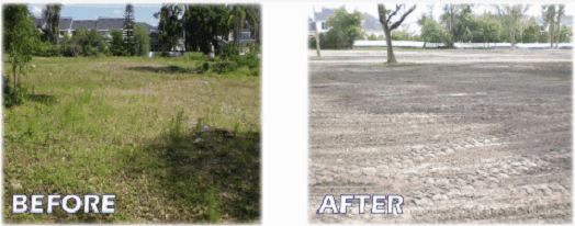 Land Clearing Tampa